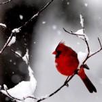 Красоты зимы (67 фото)