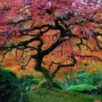 Самые красивые деревья планеты