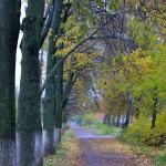 Осень у нас…