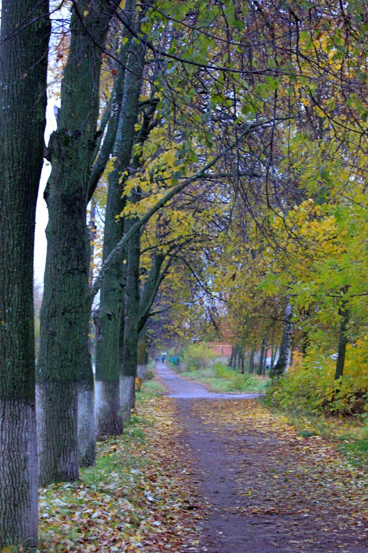 Осень мокрая