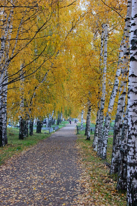 Осень яркая...