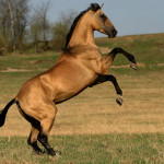 А какая Вы лошадь?