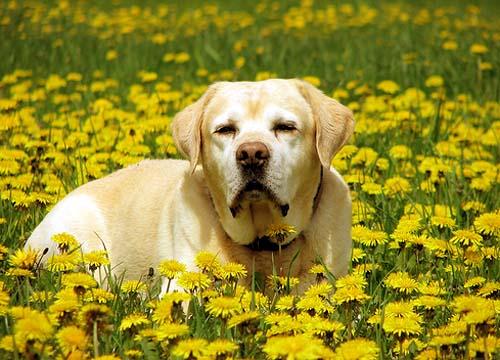 Жёлтый цвет любимый
