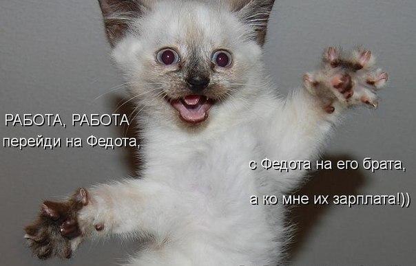 01-cat