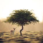 Притча о древе исполнения желаний
