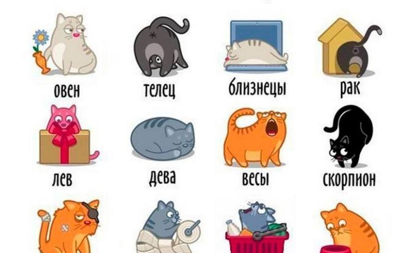Какой ты котик по знаку Зодиака?