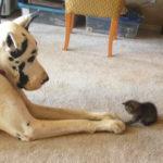 История о крошечном защитнике