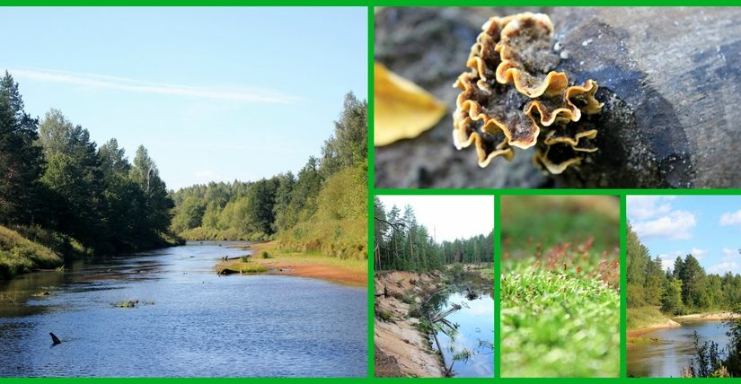 В поисках болотной руды