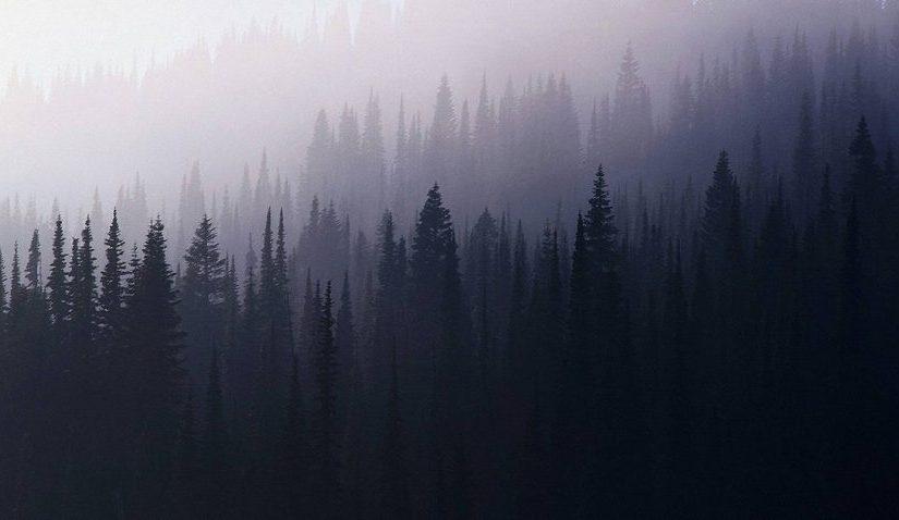 Лес чуден, тёмен и глубок…